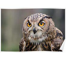 Eagle Owl, Shuttleworth, England Poster