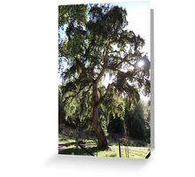 GRAND CORK TREE Greeting Card