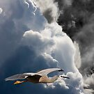 Storm Running by flexigav