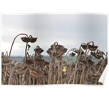 Sun (Dried) Flowers I Poster