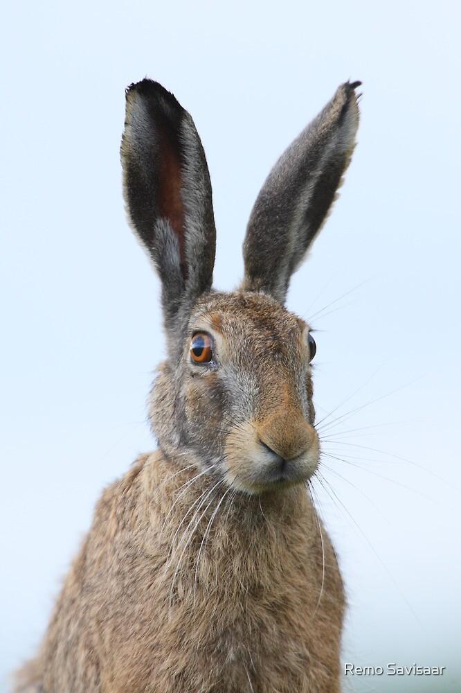 Brown Hare by Remo Savisaar