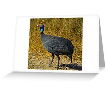 Helmeted Guinea Fowl Greeting Card