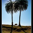The Cow and The Palm Trees by Mukesh Srivastava