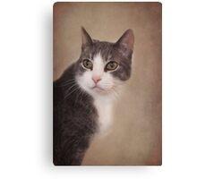 Pretty Kitty ~ Canvas Print
