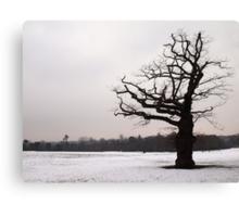 Winter Oak in Morden Park, London Canvas Print