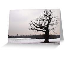 Winter Oak in Morden Park, London Greeting Card