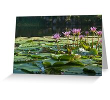 Classic lily pond image. Greeting Card