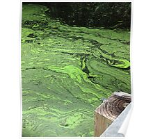 Spring Alga Bloom Poster