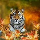 Wild Tigers by Carol  Cavalaris