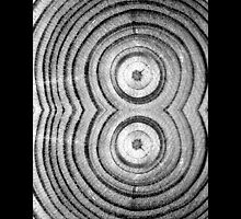 Dendrochronology - Tree Rings In Shape Of Number Eight  by © Sophie W. Smith