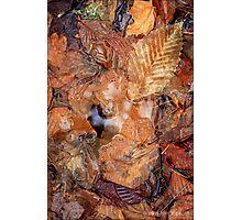Leaf Puddle Photographic Print