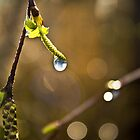 Spring Dew by James  Landis