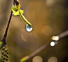 Spring Dew by James  Landis