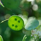 Spotty Green Leaf by unstoppable