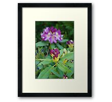 About to Blossom Framed Print