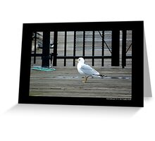 Larus Delawarensis - Ring-Billed Gull At The Dock - Port Jefferson, New York Greeting Card