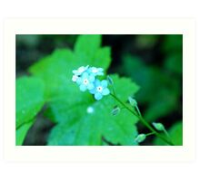 Small cool blue flowers Art Print