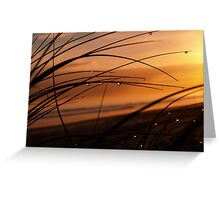 Golden light. Greeting Card