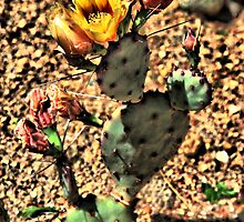 Flowering Cactus by DFWHDR