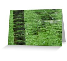 Feathery fern like plant. Greeting Card