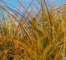Beach grasses random growth. by brians101