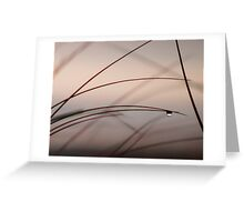 Abstract grasses. Greeting Card