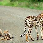 MOTHER & CUBS - THE CHEETAH - Acinonyx jabatus - Jagluiperd by Magaret Meintjes