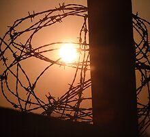 barbed wire by brandi duhon