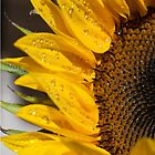 Sunflower iPhone Cover by GerryMac