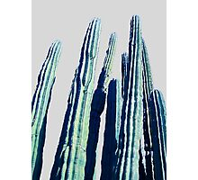 Cactus #redbubble #home #tech #style #buyart Photographic Print