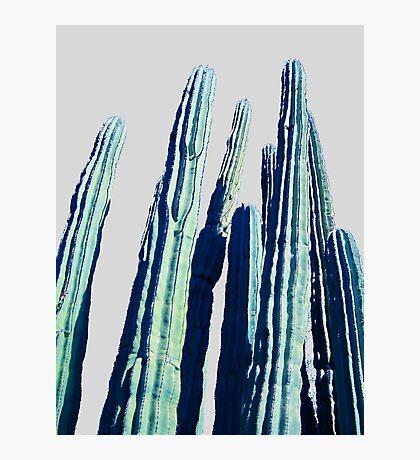 Cactus #redbubble #home #tech #style #buyart Photographic Print