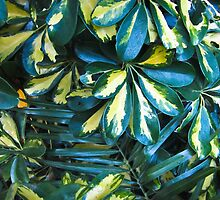 Variegated leaves- El Salvador by David Chesluk