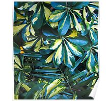 Variegated leaves- El Salvador Poster