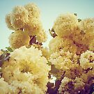 Snowball Flowers by unstoppable