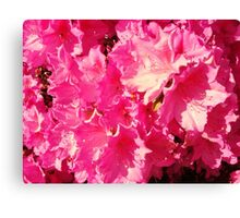 Mass of pink flowers Canvas Print