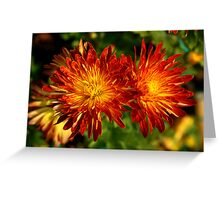 Colourful Chrysanthemums Greeting Card