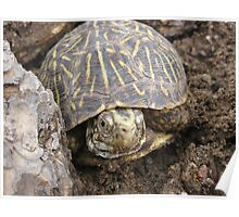 new mexico turtle  Poster
