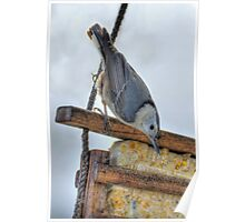 Nuthatch And Wooden Feeder Poster