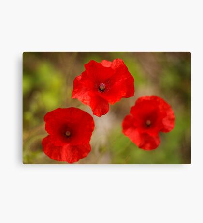 poppy's remember Canvas Print