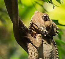 Reptilian Eye by Josie Eldred