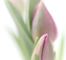 Bedroom Tulip... by Bob Daalder