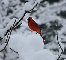 Heat In The Snow by Tracy Faught