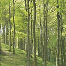 Woodland Slope in Yorkshire by himmstudios