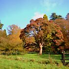 Westonbirt Arboretum Autumn day by gails-world