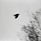In Flight by Primitive1