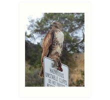 Hawk eating Prey Art Print