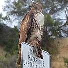 Hawk eating Prey by ShawnTsunami