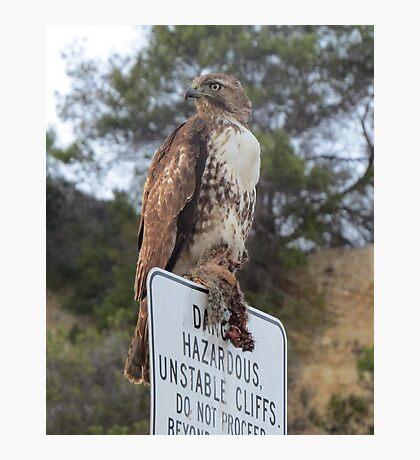 Hawk eating Prey Photographic Print