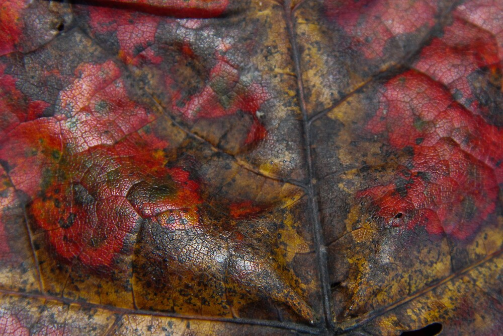 Autumn decay  by digitalanomaly