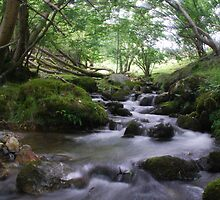 Welsh stream by Crimmy